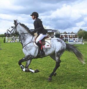 equestrian underwear